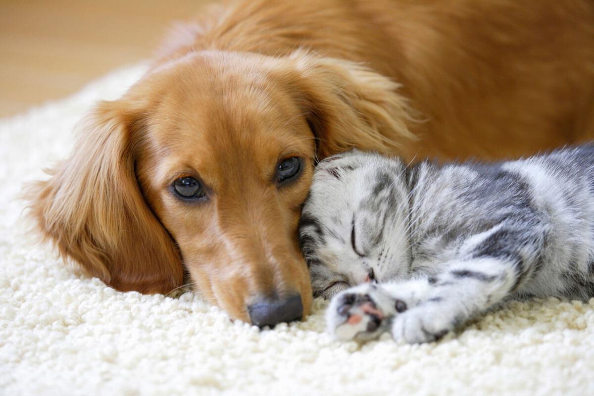 犬を飼ってからアレルギーが慣れることはある?