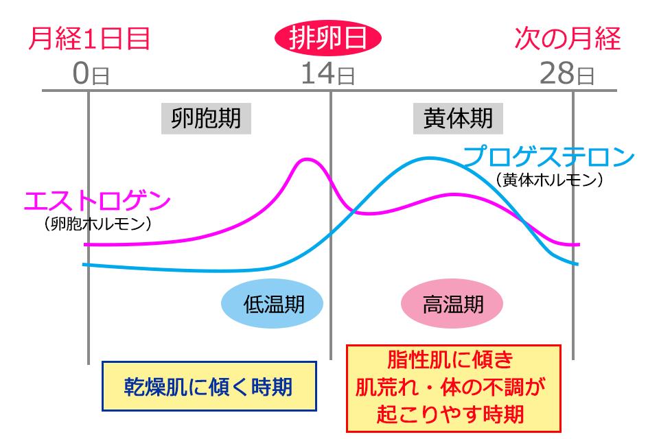 生理中の女性ホルモンの周期