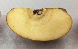 アスタリフトを塗ったリンゴ