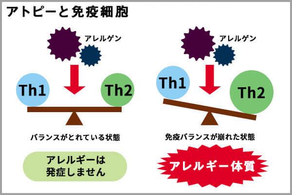 免疫バランスとアレルギーの関係