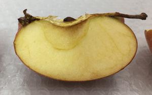 メディプラスゲルを塗ったリンゴ