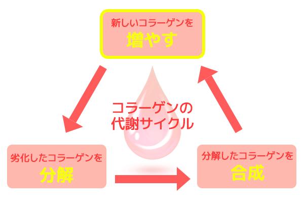 コラーゲンの代謝サイクル