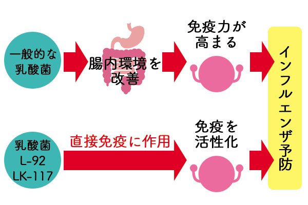 インフルエンザ予防に効果がある乳酸菌のメカニズム