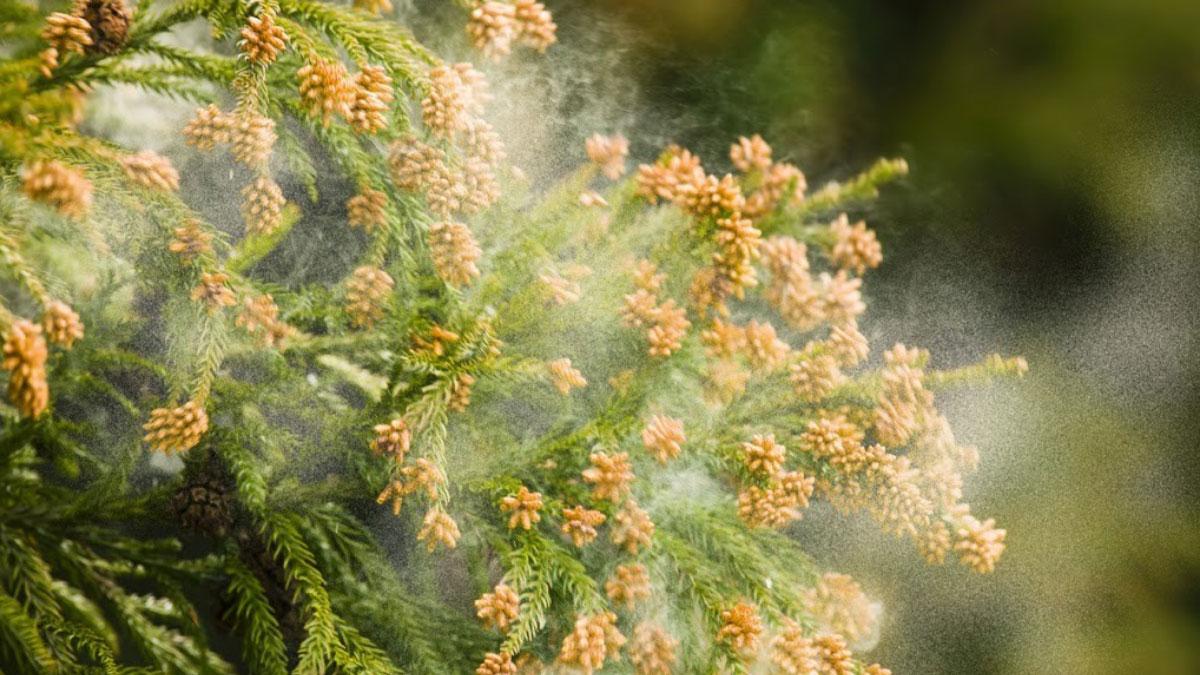 2019年の花粉症はいつまで続く?まだ間に合うオススメの対策法!