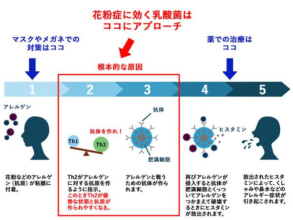 花粉症に効く乳酸菌のメカニズム